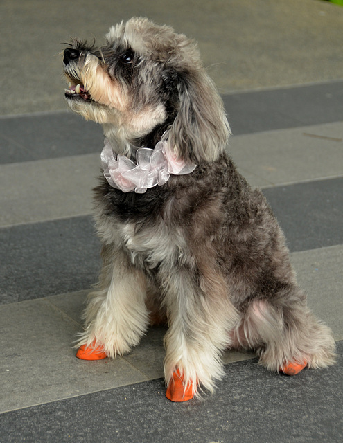 Orange shoes and lace collar