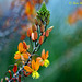 Botanic Gardens Explore 228 copy