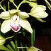 mon orchidée