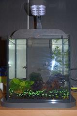 aquarium DSC 0170
