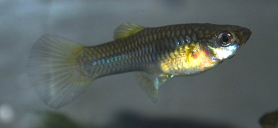 aquarium DSC 0218