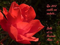 Une rose, tout simplement...