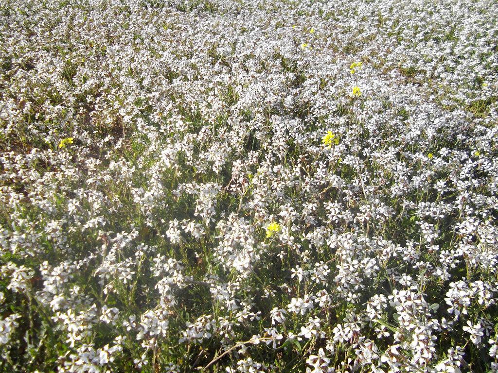 un tapis de fleurs sauvages..!