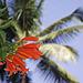 Petals and palms