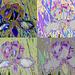 Iris montage