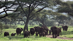 Magie du Serengeti