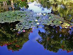 Tenerife. Jardín botánico.