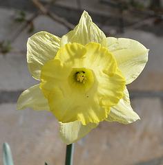Narcisse DSC 0040