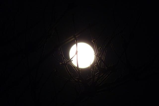 nid de lune