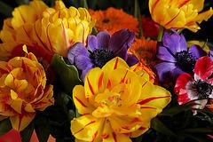 Frühllingsgefühle 1