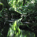 jungle polynésienne