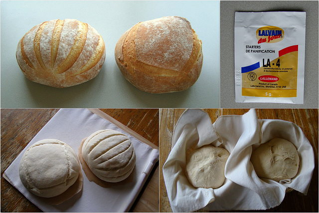 French Sourdough Bread from a powdered starter