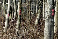 Au bois Classé X