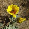 Flower & Bee (1667)