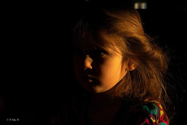 Ombre et lumière sur la crinière