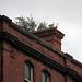 Dachterrasse in Dublin