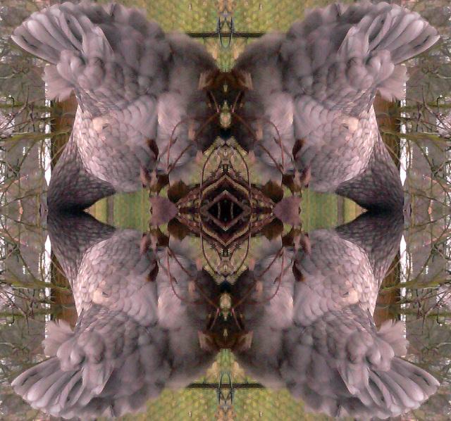 2012-02-28 18.24.36 quatuor