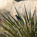 Bird in a Yucca (2485)