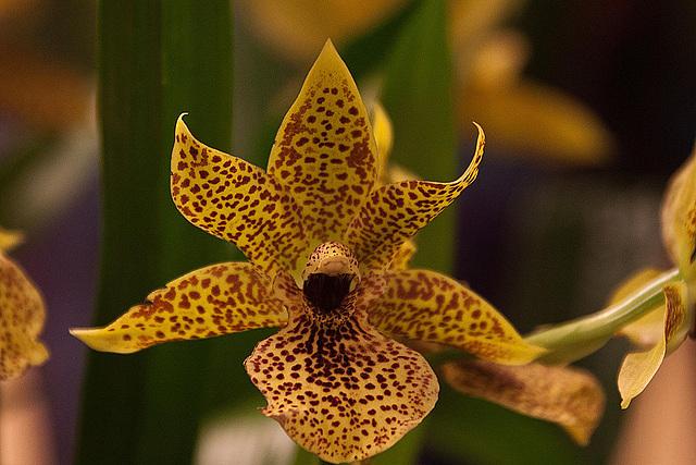 20120301 7412RAw Orchidee