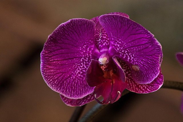 20120301 7405RAw Orchidee