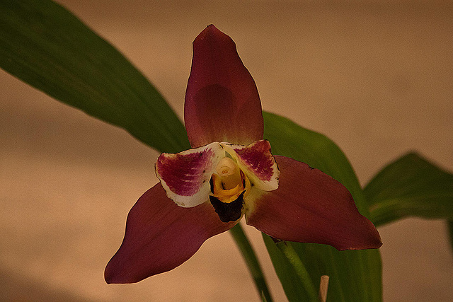20120301 7404RAw Orchidee