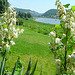 Blüten mit Blick auf die Elbe