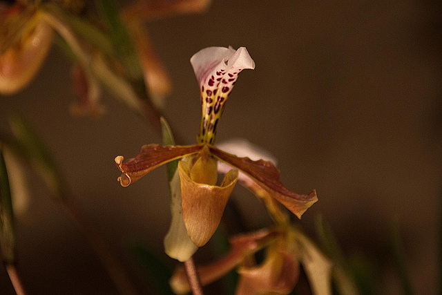 20120301 7394RAw Orchidee