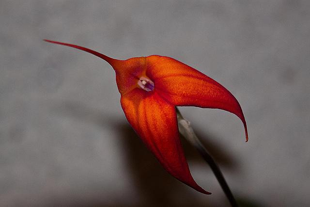 20120301 7383RAw Orchidee