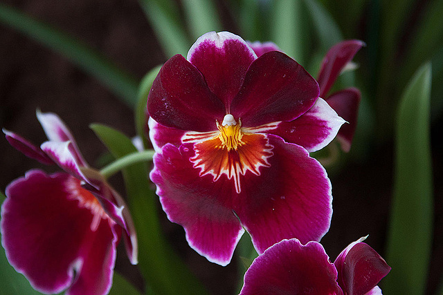20120301 7368RAw Orchidee
