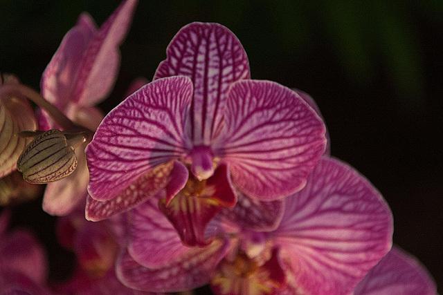 20120301 7364RAw Orchidee