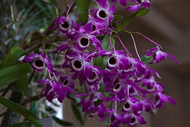 20120301 7356RAw Orchidee