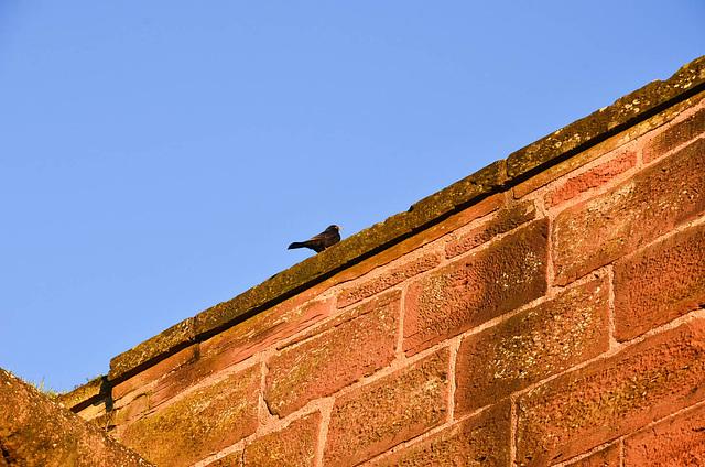 Oiseau sur un mur