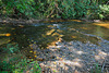 Lingas in the river