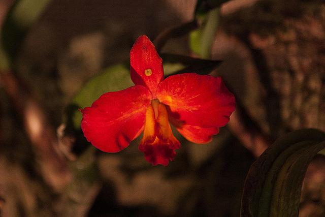 20120301 7353RAw Orchidee