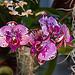 20120301 7346RAw Orchidee