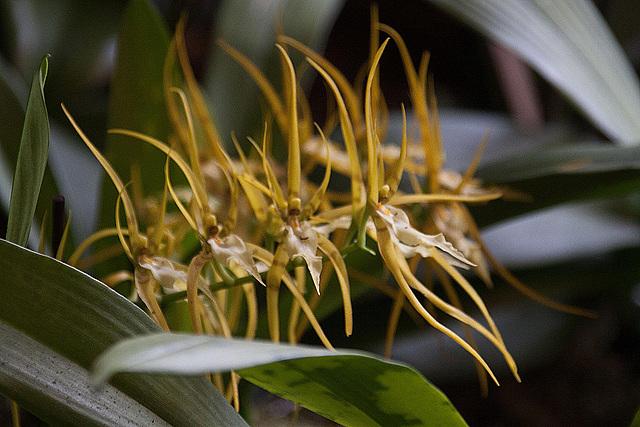20120301 7342RAw Orchidee