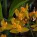 20120301 7341RAw Orchidee