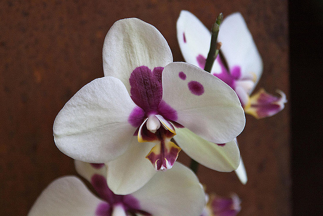 20120301 7336RAw Orchidee