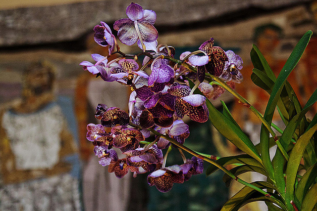 20120301 7328RAw Orchidee