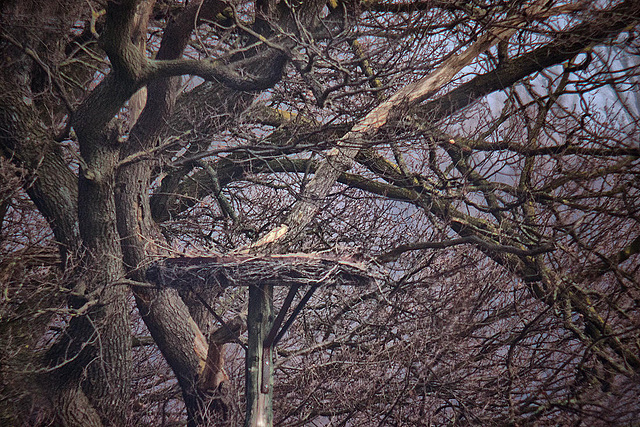 20120309 7592RDw Baum, Storchennest