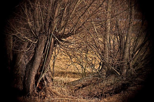 20120309 7585RDw Bäume