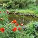 PICT16593ac Pond and Red Poppies of my Niece Gardens