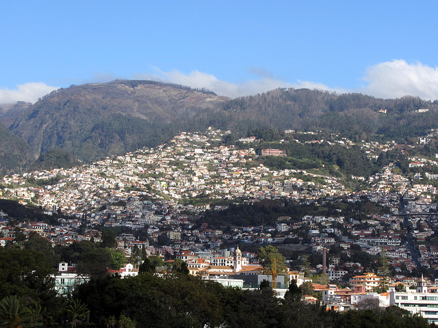 IMG 3260 Funchal