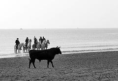 toro noir