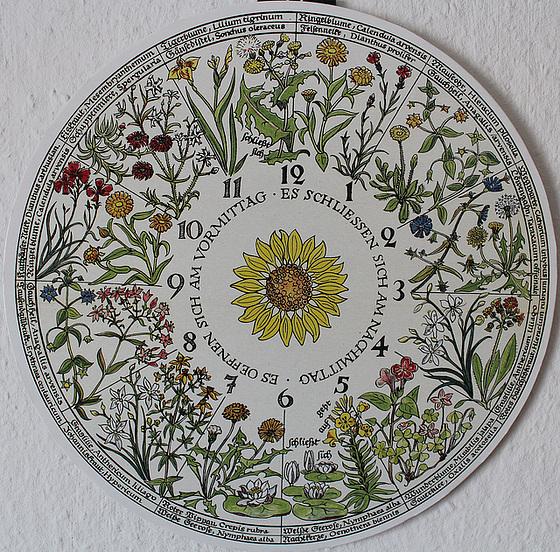 Die Blumenuhr von Linné