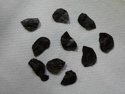 semis d 39 amaryllidaceae. Black Bedroom Furniture Sets. Home Design Ideas