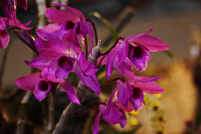 20120301 7320RAw Orchidee