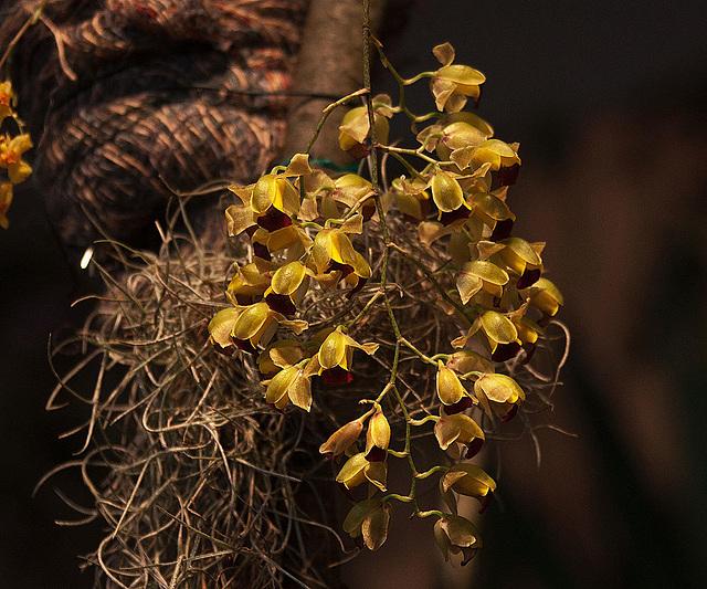 20120301 7319RAw Orchidee