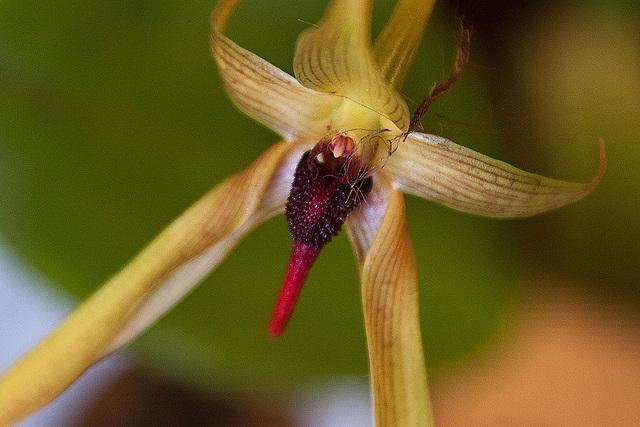 20120301 7310RAw Orchidee