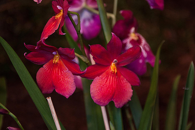 20120301 7307RAw Orchidee